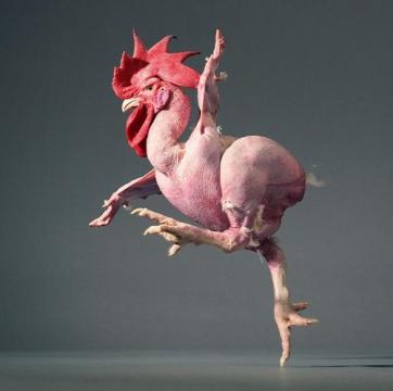фото ощипанная курица