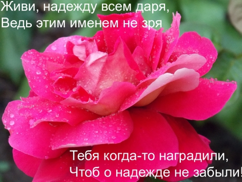 4341088-4e28d0bcf264b946.jpg