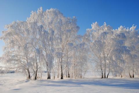 http://www.proshkolu.ru/content/media/pic/std/5000000/4671000/4670818-e1f5d9c43a9cfc7b.jpg
