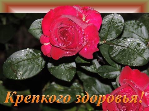 6229620-9d3545b96f2de425.jpg