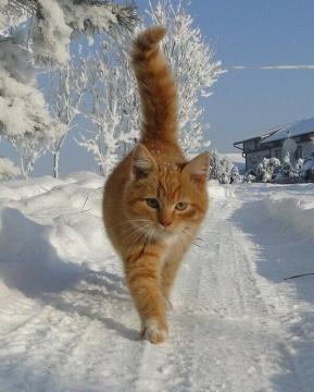 http://www.proshkolu.ru/content/media/pic/std/7000000/6337000/6336905-98857dfaf472e51d.jpg